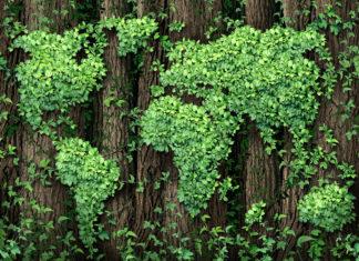 Klimaschutz Gruene Welt