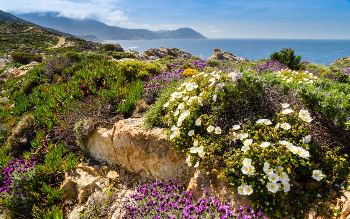 Korsika: Inse der Düfte!