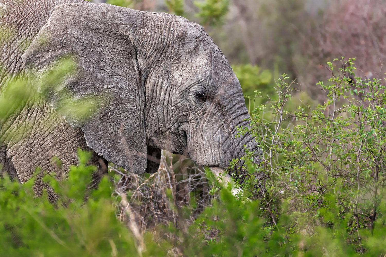 Mehr als Mehr als 12.000 Tiere leben heute im Reservat / Bild: shutterstock