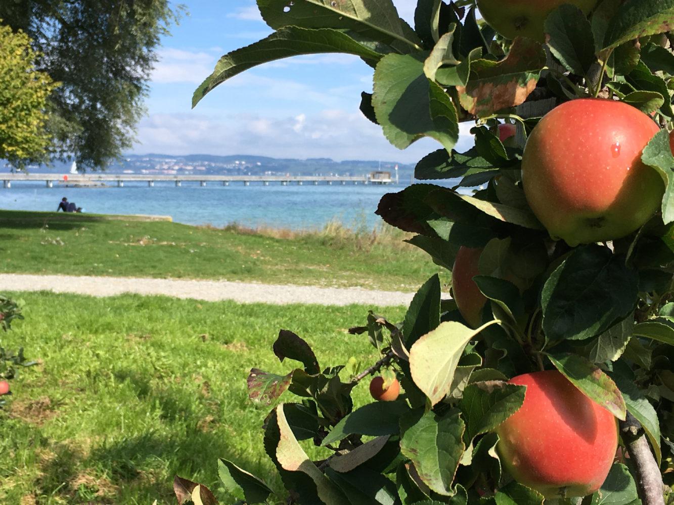 An den sanften Hügeln des Apfelkanton Thurgau feiert das Dörfchen Altnau während der Altnauer Apfelwochen bereits zum zwanzigsten Mal die Apfelernte. / Bild: Altnauer Apfelwochen