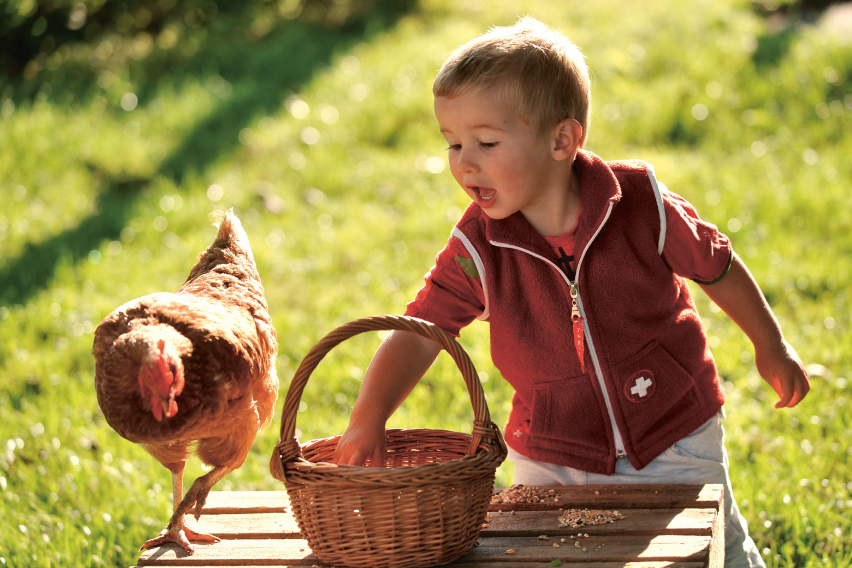 Beim «Buurehof erläbe» können grosse und kleine Hobby-Landwirte tatkräftig mithelfen. / Bild: Thurgau Tourismus