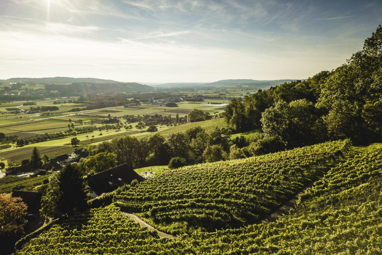 Aussicht Weinfelden Ottenberg / Bild: Thurgau Tourismus