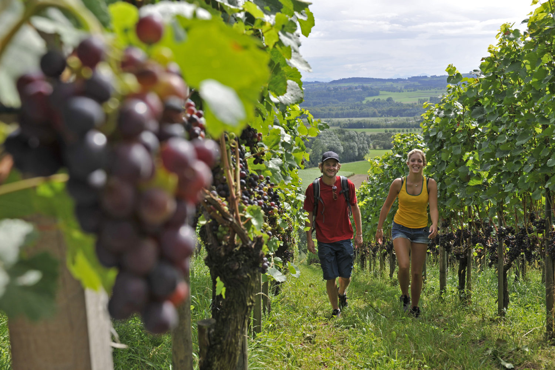 Weinfelden Wanderer im Weinberg / Bild: Thurgau Tourismus