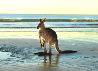 Australien / shutterstock