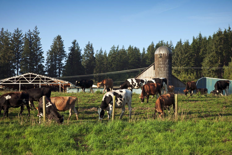 Die Tillamook Cheese Factory in Oregon produziert köstliche Spezialitäten aus Milch