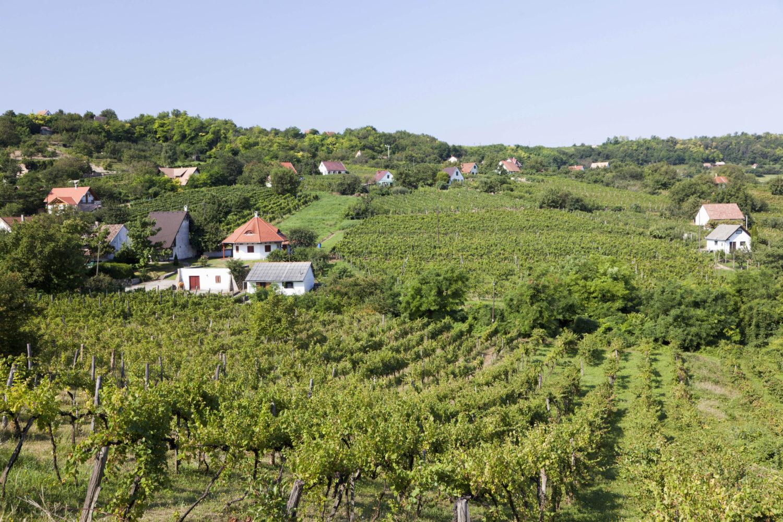 Das Weinanbaugebiet Szekszárd ist das Napa Valley Ungarns