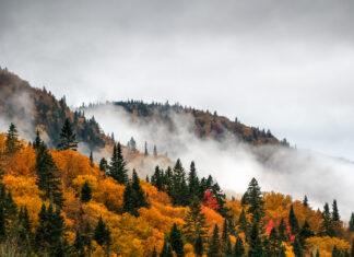 Quebec Nature / Bild shutterstock